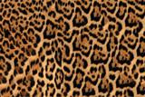 Jaguar, leopard and ocelot skin texture - 68784829