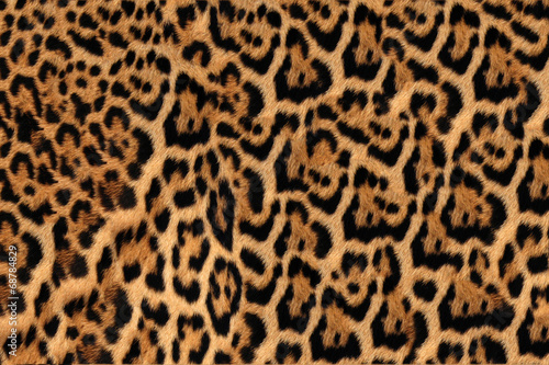 Jaguar, leopard and ocelot skin texture - 68784829