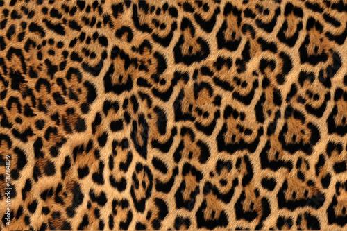 canvas print picture Jaguar, leopard and ocelot skin texture