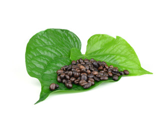 Coffee Beans leaf