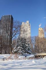 [New York]ニューヨーク・セントラルパーク[夜中の積雪のあとの青空]263