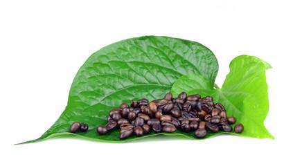 Coffee Beans leaf