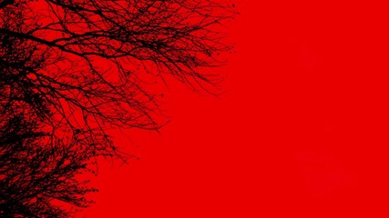 Black branches in the wind on red background