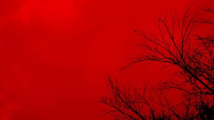 Horror scene with black tree in the wind on red background