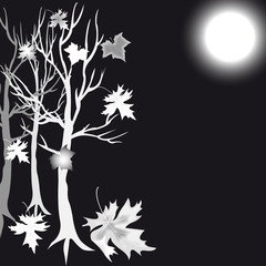 silver  tree maple and moon
