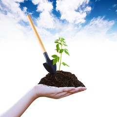 mattock and sapling on pile on hand sky background