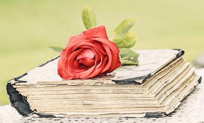 book and rose