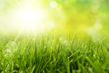 freshness grass field with sunlight
