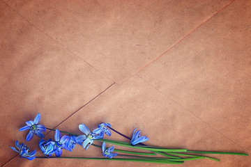 small blue spring flowers on a brown background, envelope letter