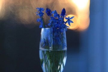 bouquet of blue spring flowers in a glass