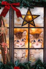 zwei Kätzchen an Weihnachten