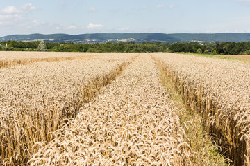 Feld in Ostwestfalen-Lippe