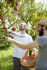 two young boys farmers that gathers peaches from the treet