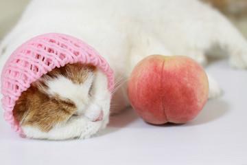 昼寝する猫と桃
