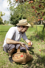 young boy farmer who gathers peaches from tree with straw basket
