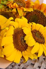 Beautiful sunflowers on wicker stand close up