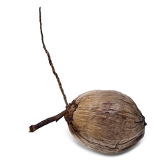 Dry coconut isolated