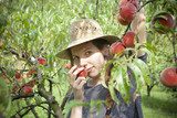 farmer woman who sniff a fresh peach from tree poster