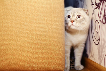 naughty cat peeking out from behind the sofa