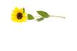 canvas print picture - Sonnenblume
