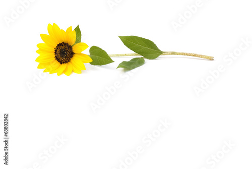 canvas print picture Sonnenblume