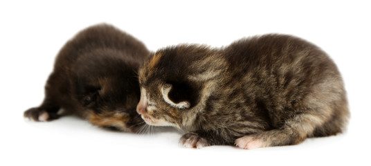 Beautiful kittens isolated on white