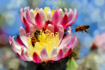 bee and flower pollination
