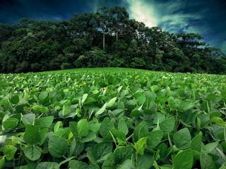 Lavoura de soja no Brasil