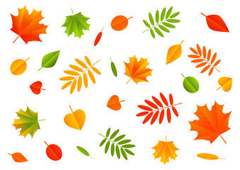 Autumn color leaves on white background