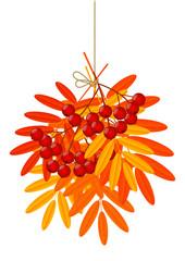 Autumn rowan leaves with berries