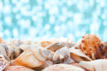 Sea shells closeup