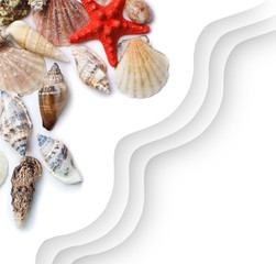 Sea shells on a background of white paper