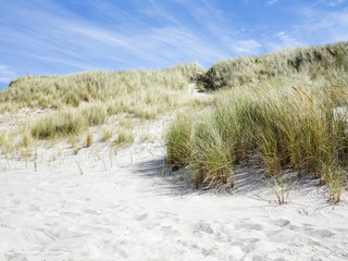 Sand dunes of Danish West Coast.