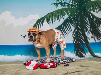 Bulldog on a boogie board on scenic backdrop