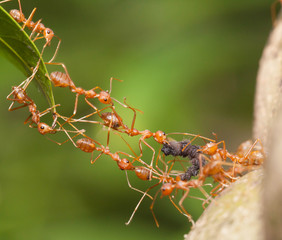 Ant bridge unity