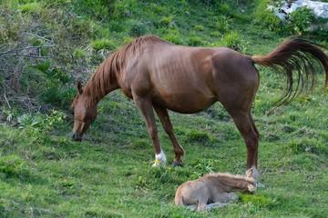 Cavalli 6