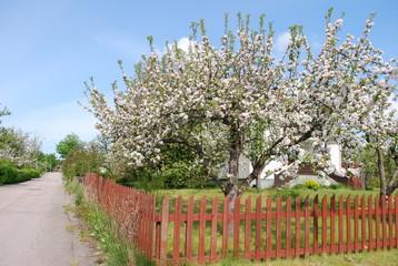 Frühling im Dorf