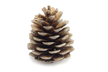 Dry pine cone on a white background