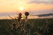 canvas print picture - Sonnenuntergang mit Disteln