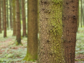 Idyllischer Waldspaziergang