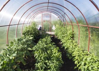 Garden greenhouse