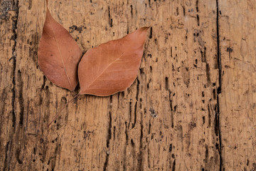 dried autumn leafs on wooden surface