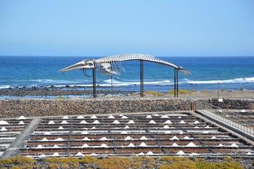 salina con scheletro di balena sullo sfondo