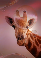 Giraffe looking at soap bubbles - artwork