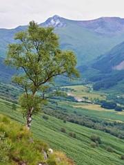 Trail  on Ben Nevis in the Scotland highlands