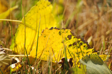 blad in de herfst
