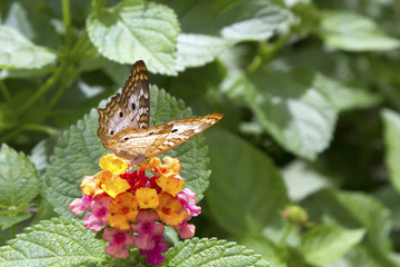 Butterfly Feeding on Bright Flower