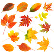 canvas print picture - Autumn leaves collage isolated on white