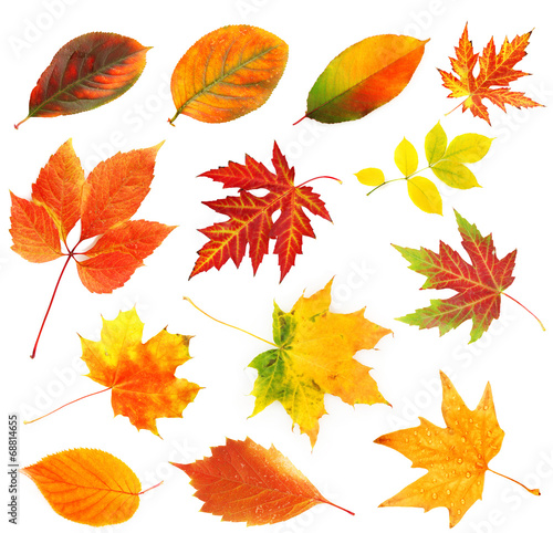 canvas print picture Autumn leaves collage isolated on white