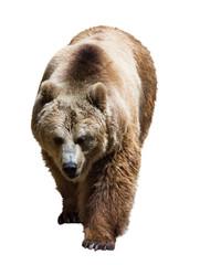 bear  over white background
